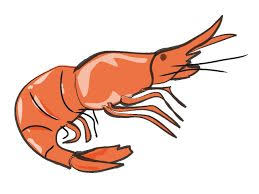 cooked shrimp clip art. Fine Clip Shrimp Clipart Fish Cooking Graphic Freeuse Stock To Cooked Clip Art