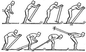 Виды ходов на лыжах для уроков по лыжной подготовке Одновременный бесшажный ход