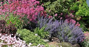 guide to low maintenance landscaping