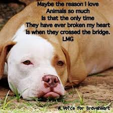 Love Animals Quotes Best Reason I Love Animals So Much Animal Quotes Pinterest Dog Quotes