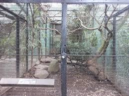 Pheasant Cage Designs Bronx Zoo Pheasant Aviaries Himalayan Monal Exhibit