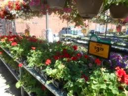 fred meyer garden center. Contemporary Fred Fred Meyer Store On Lake City Way Upper Level Garden Center Seattle WA In I