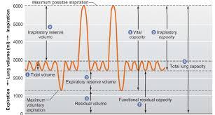 similiar lung volumes and capacities diagram keywords tuberculosis lungs diagram printable wiring diagram schematic