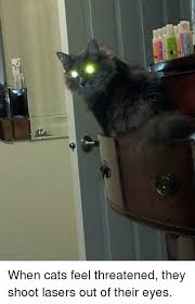 cats shooting lasers out of their eyes. Delighful Cats Cats Shitty Animalfacts And They When Cats Feel Threatened They Shoot  Lasers With Cats Shooting Lasers Out Of Their Eyes T