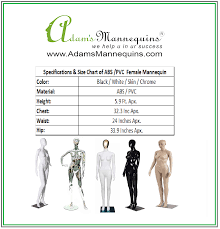 Abs Size Chart Adams Female Mannequin White Gloss Abs Fma04