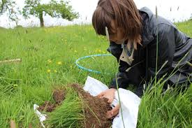 Image result for Microbiological Activity In Soil