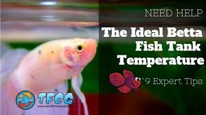 Freshwater Fish Tank Temperature Chart 9 Expert Tips To Get The Ideal Betta Fish Water Temp Super
