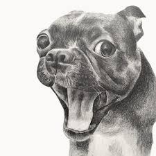 dog drawing. Unique Dog 367595f5 6ac6 4c7e A245 0d1ec0928d4f Rectangle 400x Inside Dog Drawing