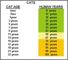 How Old Is Your Cat In Human Years The Pet Product Guru