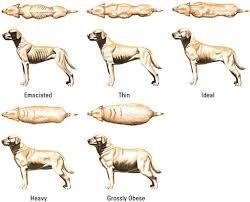 Average Pitbull Weight Chart Staffy Weight Chart Dog Obesity Chart Average Weight Of