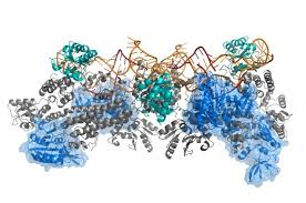 New Platform For Elucidation Of Large Protein And Nucleic Acid