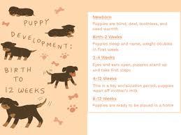 Kitten Socialization Chart Kitten Puppy Sos Care Pet Info Alley