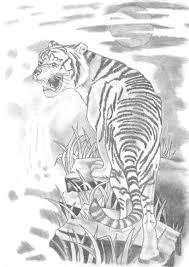 D Un Tigre Au Bord D Une Cascade