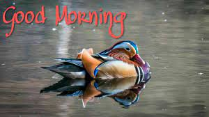 Beautiful birds good morning images ...