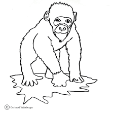 Small Picture Chimp coloring page Free Printable Coloring Pages