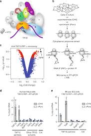 co translational embly of mammalian nuclear multisubunit ple nature munications
