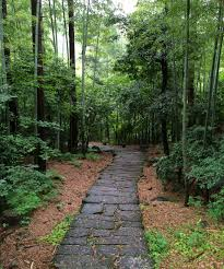 Bamboo Wikipedia