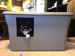 image covered cat litter. Grey Cat Litter Box Ideas With Hole Image Covered