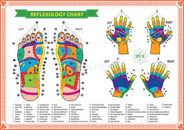 Foot And Hand Reflexology Chart Stock Illustration