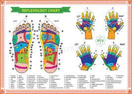 Foot Healing Chart Foot And Hand Reflexology Chart Stock Illustration