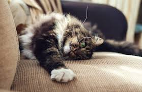 How To Stop Your Cat From Scratching Up Your Furniture CatTime