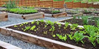 self watering garden bed. Fine Bed How To Make A SelfWatering Vegie Bed Self Watering Garden D