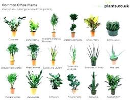 Office cubicle plants Low Light Small Office Plant Small Plants For Office Small Desk Plants Small Desk Plants Office Cubicle Plants Doragoram Small Office Plant Indoor Small Office Plants Wholesale Doragoram