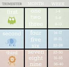 Pregnancy Chart In Months How Many Months Am I If Im 24 Weeks Tomorrow The Bump