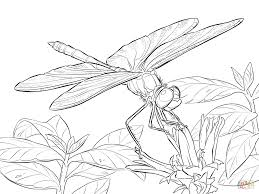 Small Picture Yellow Winged Darter Dragonfly coloring page Free Printable