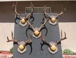 how to mount deer antlers crown mount