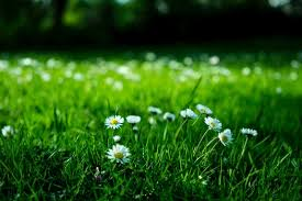 Green Grass Field Free Stock Photo