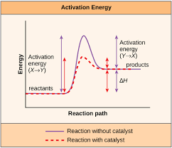 Bis2a 4 2 Enzyme Active Sites And Enzyme Regulation