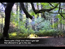 It's anchored by a historic downtown core and is home to a handful of unique attractions, including the kinetic museum eureka, morris graves museum of art, and carson mansion. Grizzly Creek Redwoods State Park Youtube