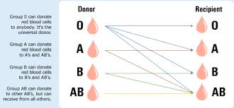 Universal Blood Type Chart Blood Types