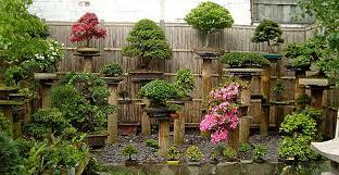 bonsai gardens. my wifes garden bonsai gardens