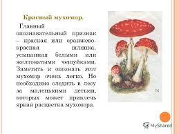 Презентация на тему ЯДОВИТЫЕ ГРИБЫ Работу выполнил Макунин  8 Красный мухомор