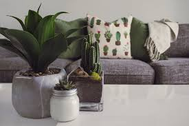 Image Small Indoor Home Office Plants Royalty Photo Of Plants On The Table Indoor Home Office Royalty Jigsyco Is Great Content Indoor Home Office Plants Royalty Illustration Of Houseplants
