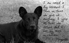 Dog Quotes Stunning Dog Quotes Wonderful Sayings About Man's Best Friend HubPages