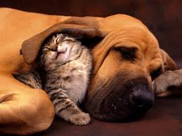 dogs wallpapers top 781 dogs wallpapers