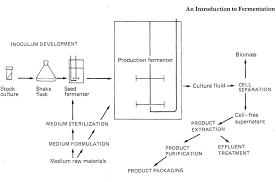 Liquid Fermentation Flow Chart Nammex