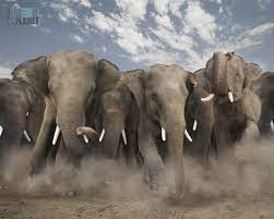 Elephant Hd Wallpaper posted by ...
