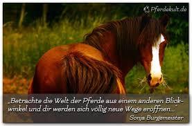 Betrachte Die Welt Der Pferde