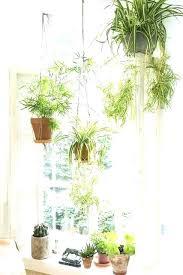 indoor window garden. indoor hanging herb garden full image for window .