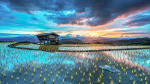 Microsoft Spotlight Sunrise On Rice Terraces Mae Jam Chiang Mae Thailand