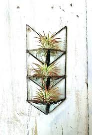 awesome air plant wall glamorous air plant wall holder air plant glass arrow by wall mounted