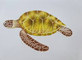 Small Picture Sea Turtle All Drawing Drawing Pixoto