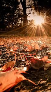 Autumn Leaves On The Ground Sunset ...