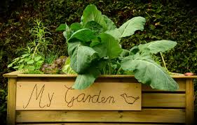 Kitchen Garden Foods Grow Organic Food In Your Kitchen Garden Saving The Green