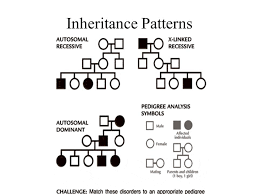Inheritance Patterns New A Way To Look At Inheritance Patterns Over Many Generations Ppt