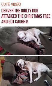 Guilty Dog on Pinterest | Dog Shaming, Dogs and Crazy Animals via Relatably.com